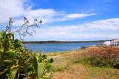Fornells es Mercadal in Menorca at Balearic islands — Stock Photo