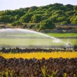 Irrigation spring on cereal fields in Menorca balearic — Stock Photo