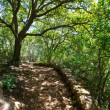 Mediterranean forest in Menorca with oak trees — Stock Photo