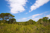 Mediterranean forest landscape in Menorca near Macarella — Stock Photo