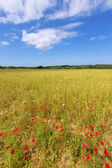 Menorca Ciutadella green grass meadows with red poppies — Stock Photo