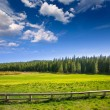 Yosemite meadows and forest in California — Stock Photo