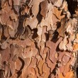 Pine tree trunk bark detail in Grand Canyon Arizona — Stockfoto