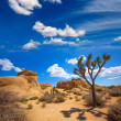 Stock Photo: JoshuTree National Park Jumbo Rocks Yuccvalley Desert Califo