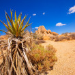 Joshua Tree National Park Yucca Valley California — Stock Photo