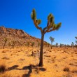 Stock Photo: JoshuTree National Park YuccValley Mohave desert California