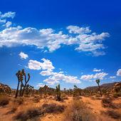 Maltepe milli parkı yucca valley mohave desert kaliforniya — Stok fotoğraf
