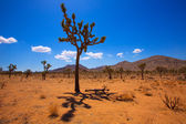 Joshua Tree National Park Yucca Valley Mohave desert California — Foto de Stock
