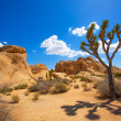 Joshua Tree National Park Jumbo Rocks Yucca valley Desert Califo — Stock Photo