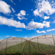 Greenhouse with chard vegetables under dramatic blue sky — Photo