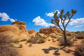 Joshua Tree National Park Jumbo Rocks Yucca valley Desert Califo — Stock Photo