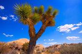 Joshua Tree National Park Yucca Valley California — Stock Photo