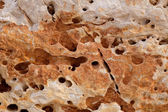 Eroded weathered limestone in Mediterranean shore — Stock Photo