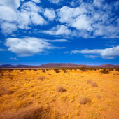 Mohave desert in California Yucca Valley — Stock Photo