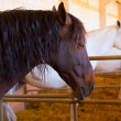Horses in a row at cattle fair in Spain — Stock Photo
