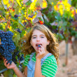 Farmer kid girl in vineyard eating grape in mediterranean autumn — Stock Photo