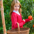 Farmer kid girl harvesting tomatoes — Stock Photo