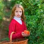 Farmer kid girl harvesting tomatoes — Stock Photo