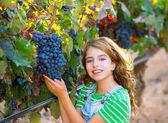 Farmer kid girl in vineyard harvest autumn leaves in mediterrane — Stock Photo