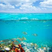 Mediterranean underwater with salema fish school — Stock Photo