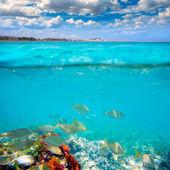 Denia Alicante Marineta Casiana beach fishes underwater — Stock Photo