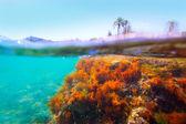 Mediterranean underwater seaweed Denia Alicante spain — Stock Photo