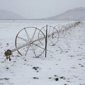Cereal fields with irrigation wheels with snow in Nevada — Stock Photo