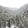 NevadUSspring snow in mountains — Stock Photo #37660777