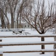 Nevada USA first snow in the park — Stock Photo