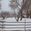 Stock Photo: Nevada USA first snow in the park