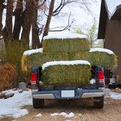 雪稻草的卡车在内华达州美国 — 图库照片