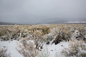 Nevada USA spring snow in the mountains — Stock Photo