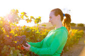 Farmer woman in vineyard harvest autumn leaves in mediterranean — Stock Photo