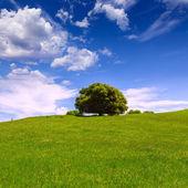 California meadow hills with oak tree — Stock Photo