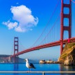 San Francisco Golden Gate Bridge seagull California — Stock Photo