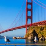 San Francisco Golden Gate Bridge seagull California — Stock Photo