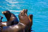 San Francisco Pier 39 lighthouse and seals California — Stock Photo