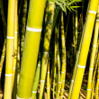 Bamboo cane field with selective focus — Stock Photo #39731701