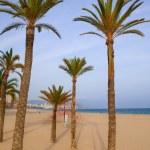 Benidorm palm trees beach in mediterranean alicante — Stock Photo #39734509