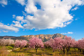 Mongo in Denia Javea in spring with almond tree flowers — Stock Photo