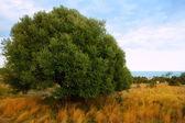 Sierra de Irta in Castellon province with sea view — Stock Photo