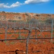 Stock Photo: Winter leafless vineyard field in Utiel RequenSpain