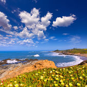 California Bean Hollow State beach in Cabrillo Hwy — 图库照片