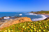 California Bean Hollow State beach in Cabrillo Hwy — Zdjęcie stockowe