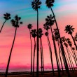 California sunset Palm tree rows in Santa Barbara — Stock Photo #40190885