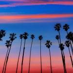 California sunset Palm tree rows in Santa Barbara — Stock Photo #40192079