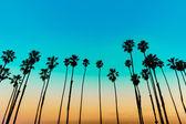 California sunset palm tree rijen in santa barbara — Stockfoto