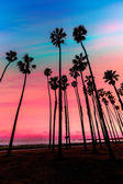California sunset palm tree rijen in santa barbara — Stockfoto