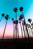 California sunset Palm tree rows in Santa Barbara — Stock Photo