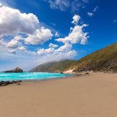 California Pfeiffer Beach in Big Sur State Park — Stock Photo